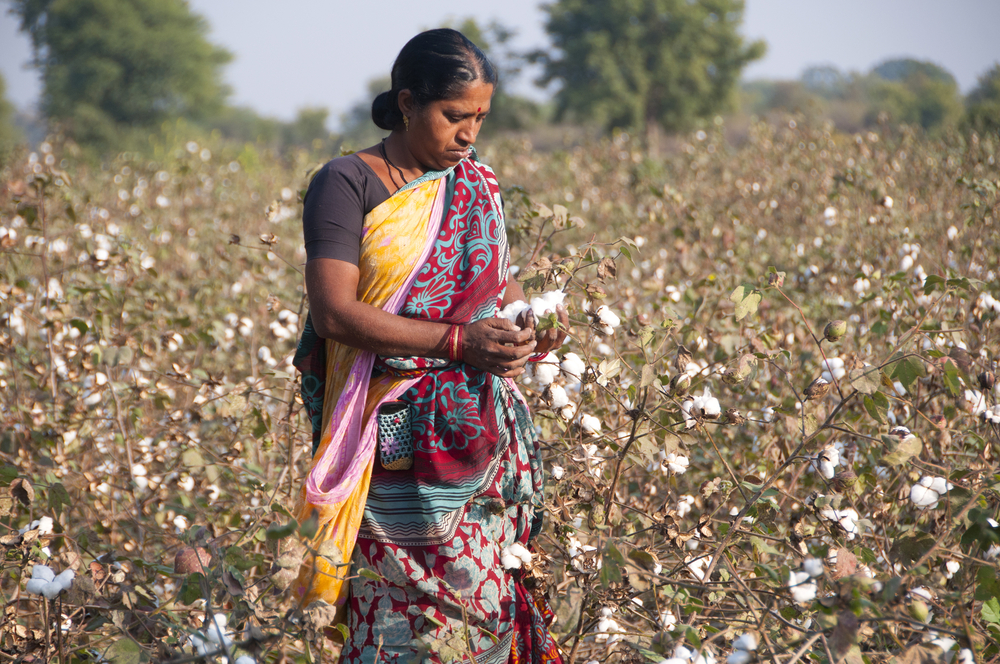 Cotton production in India