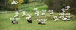 Technology in Animal Husbandry