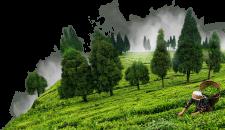 Oportunidades de negócios em Assam