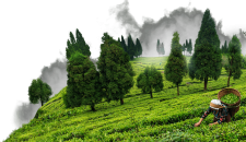 Business Opportunities in Assam