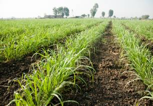 FDI Opportunities in Indian Agriculture