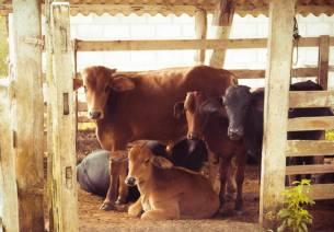 Strengthening India Mexico Partnership: Animal Husbandry and Dairy